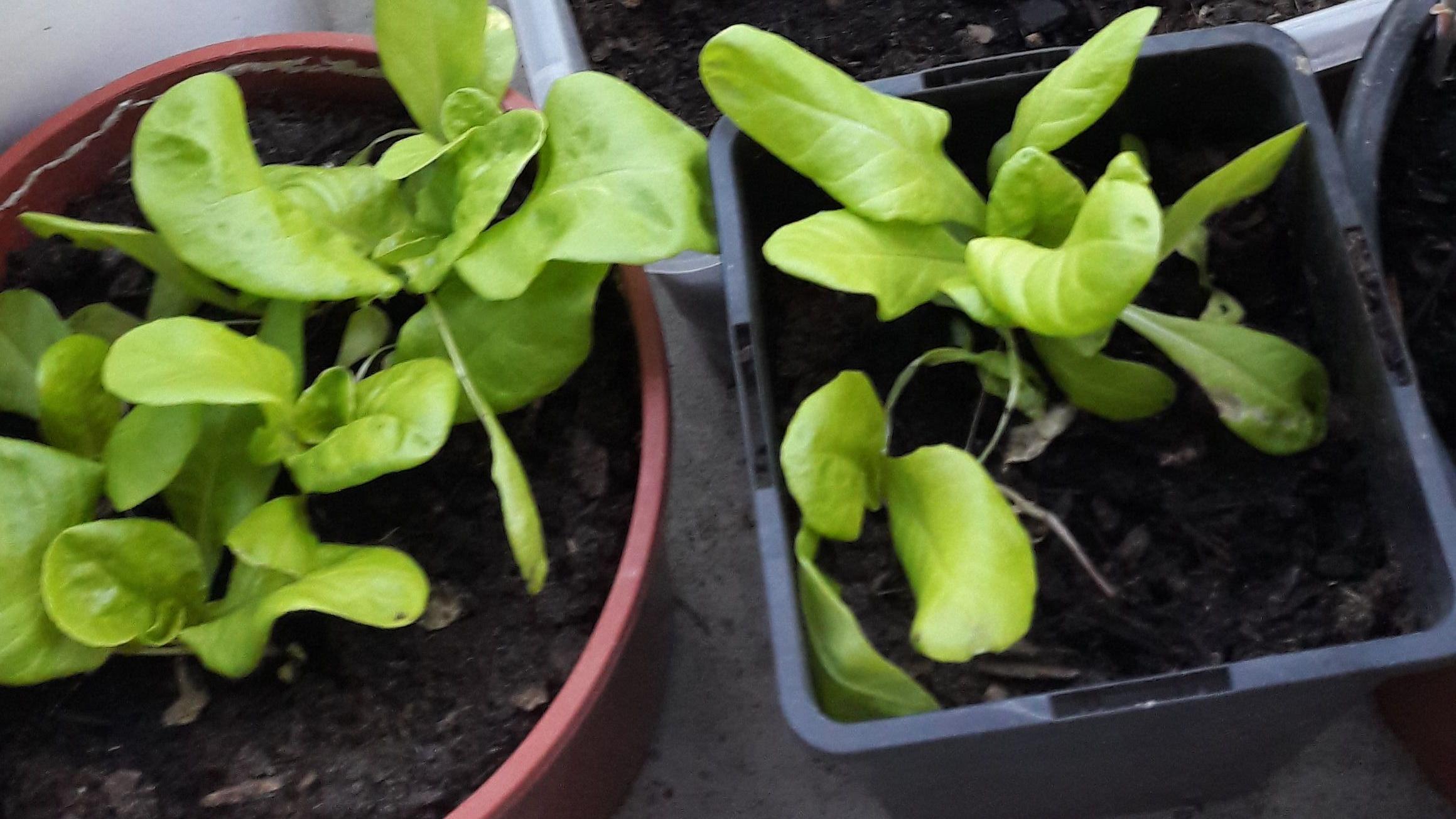 Den Pflanzen beim Wachsen zusehen Fortsetzung
