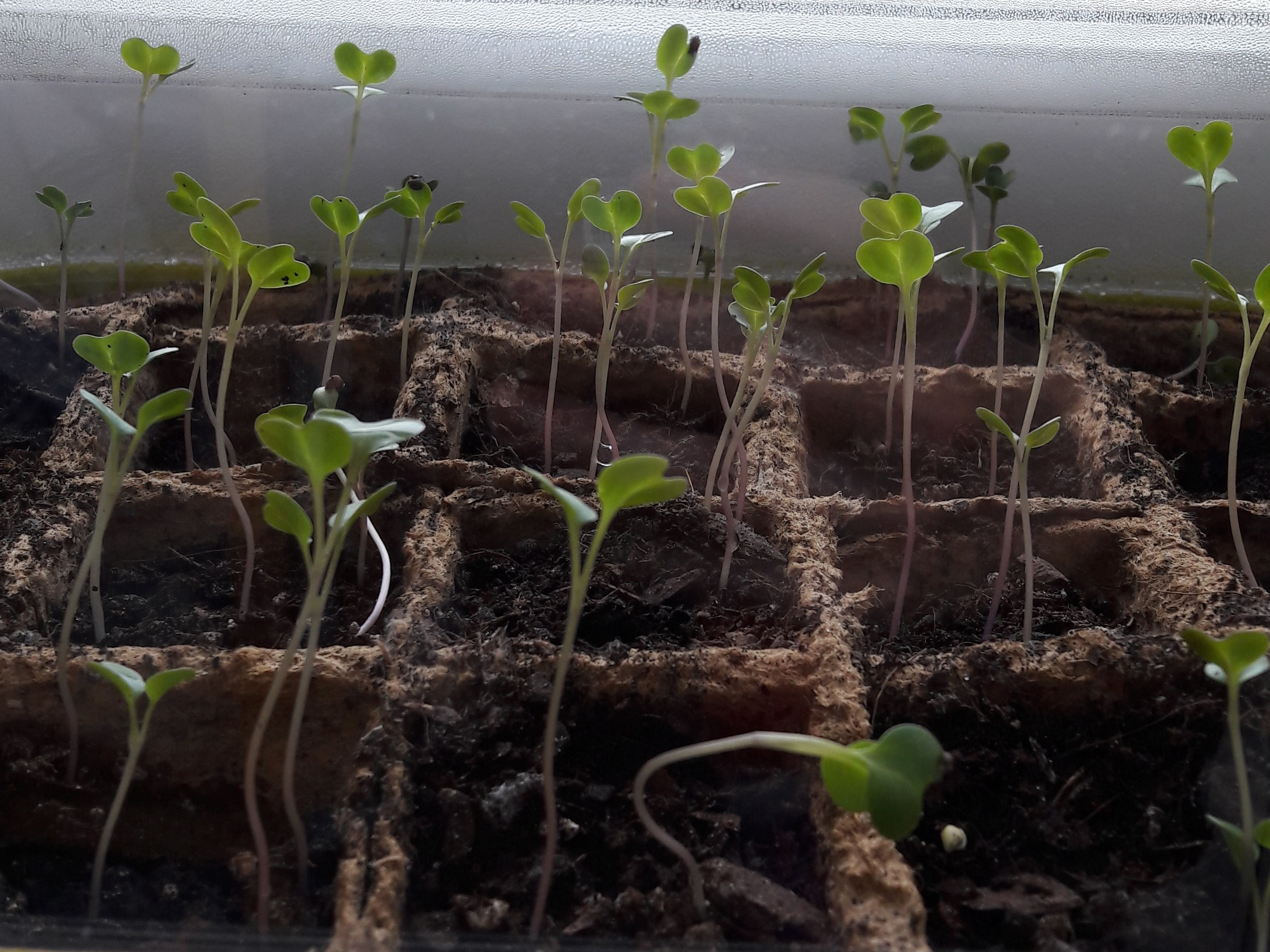 Den Pflanzen beim Wachsen zusehen
